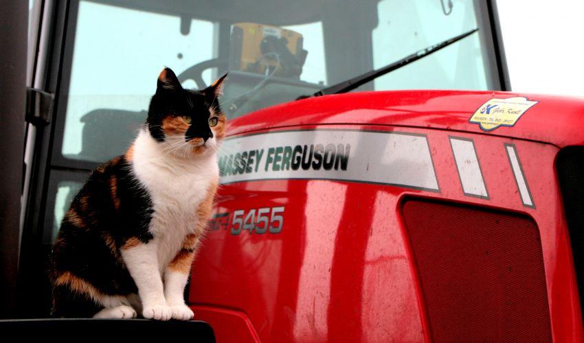 Massey Ferguson Haarbal