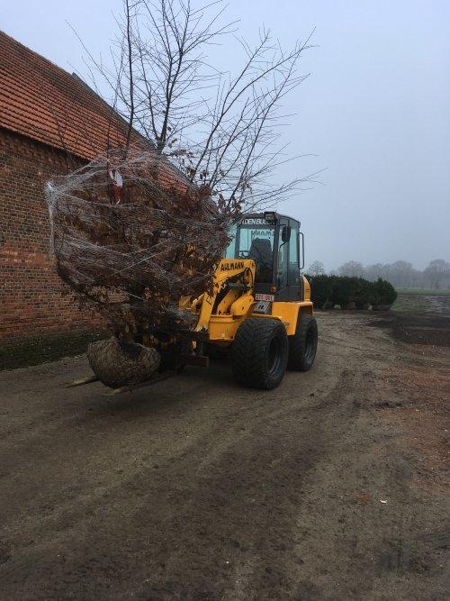 Op deze foto is A.van Den Bulck (Wiekevorst) × actief met een Ahlmann AZ 85, lossen van bomen.. Geplaatst door fresheliciouss op 23-01-2020 om 09:22:15, met 5 reacties.