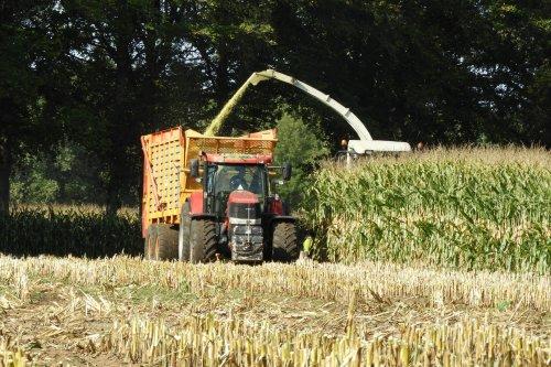 Volkerink Heino in de mais  https://youtu.be/ByiFgeuK7_8. Geplaatst door pekkerietfan op 09-10-2019 om 22:16:00, op TractorFan.nl - de nummer 1 tractor foto website.