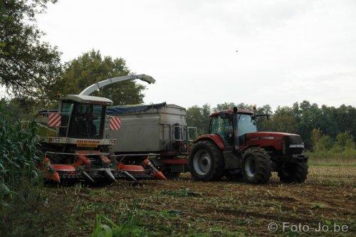 Foto van een Case IH MX 255 Magnum, bezig met maïs hakselen. Landbouwer Vleugels.  Meer foto's op [url=http://www.foto-jo.be/fotos.htm]Foto-Jo[/url]