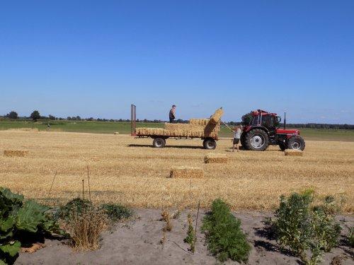 Stro baaltjes laden met de 956 XL. Geplaatst door Han745XL op 09-08-2018 om 21:28:29, op TractorFan.nl - de nummer 1 tractor foto website.