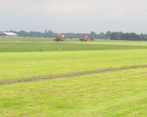 Foto van een Case International 1056 XL, bezig met gras inkuilen.. Geplaatst door basconijn97 op 21-06-2013 om 21:51:27, op TractorFan.nl - de nummer 1 tractor foto website.
