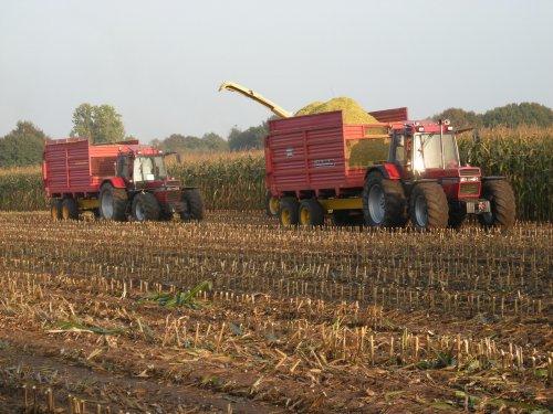 Foto van een Case International 1056 XL, bezig met maïs hakselen.. Geplaatst door gilles1 op 14-12-2014 om 15:34:24, met 2 reacties.