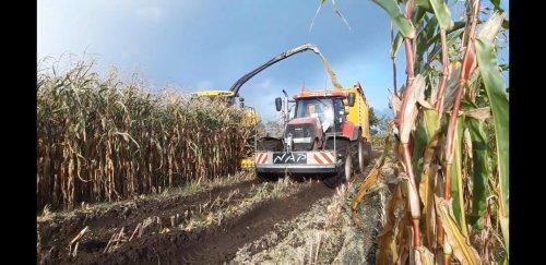 Loonbedrijf G. Nap (Ede Gld) × op de foto met een Case Meerdere. https://youtu.be/ry38Z_7sWQI. Geplaatst door g-g op 07-12-2019 om 14:58:35, op TractorFan.nl - de nummer 1 tractor foto website.