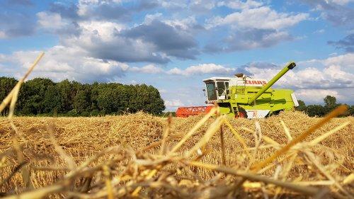 Foto van een Claas Dominator 96, bezig met maaidorsen. Geplaatst door Koiter op 06-08-2017 om 19:12:22, op TractorFan.nl - de nummer 1 tractor foto website.