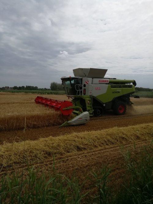 Hier zie je Loonbedrijf De Bruyne (Assenede) × met een Claas Lexion 770.. Geplaatst door Lode103s op 19-07-2019 om 09:38:52, op TractorFan.nl - de nummer 1 tractor foto website.