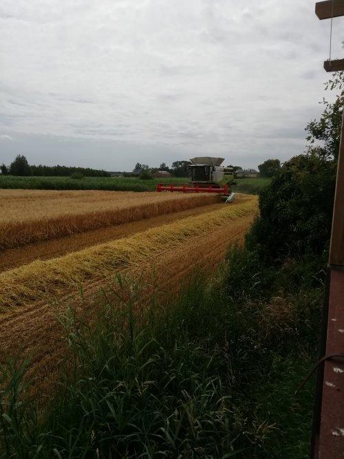 Hier zie je Loonbedrijf De Bruyne (Assenede) × met een Claas Lexion 770.. Geplaatst door Lode103s op 19-07-2019 om 09:38:54, op TractorFan.nl - de nummer 1 tractor foto website.