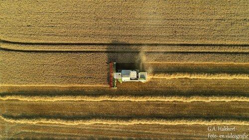 Loonbedrijf de Bruin uit Tiel aan het dorsen met hun Claas Lexion 440. Geplaatst door gypCaseXL op 24-07-2019 om 21:45:32, op TractorFan.nl - de nummer 1 tractor foto website.