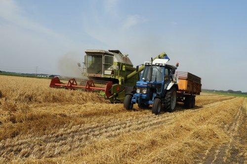 Gerst dorsen.  https://youtu.be/Q_NLm2treRs. Geplaatst door pekkerietfan op 10-08-2019 om 17:05:36, op TractorFan.nl - de nummer 1 tractor foto website.