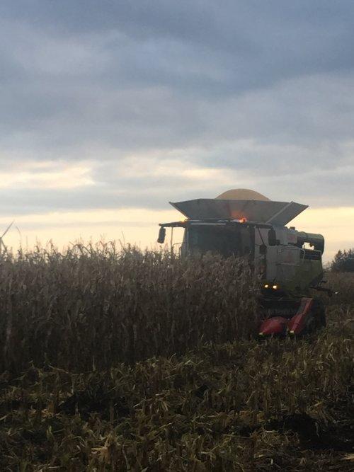 Foto van een Claas Lexion 780, als het maar niet droog wil worden moet de mais maar door de combine. Geplaatst door rubencasecs op 12-11-2019 om 20:28:57, op TractorFan.nl - de nummer 1 tractor foto website.