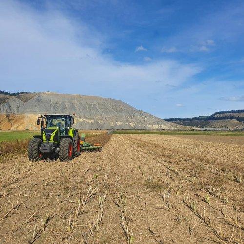 radijs stoppel bewerken, de oogst is binnen, de herfst is ook binnen gevallen. het Radijs zaad heeft als bestemming nederland.