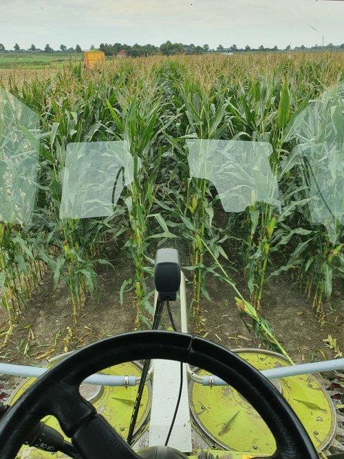 Foto van een Claas Jaguar 870 Speedstar. Vandaag de eerste mais er af. Voor een klant die door de mais heen is.