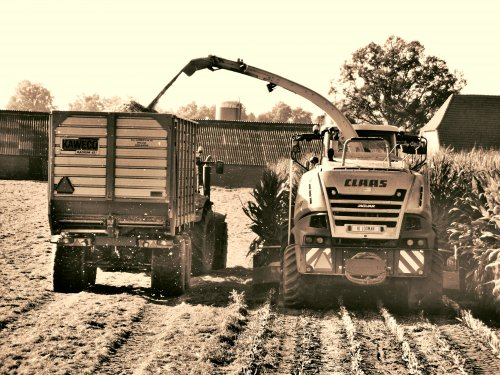 Foto van een Claas Jaguar 840 2014, bezig met maïs hakselen. [@velsje] met de Radium.. Geplaatst door radium45 op 06-10-2014 om 21:13:27, op TractorFan.nl - de nummer 1 tractor foto website.