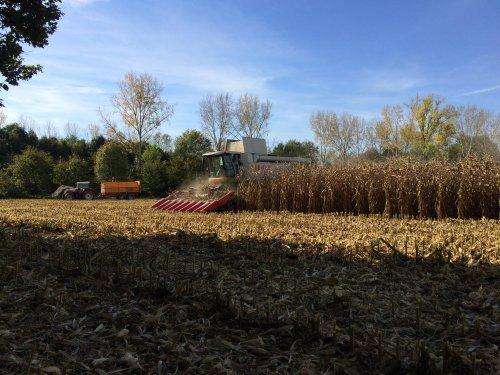 Loonbedrijf Broekx Bree, korrelmaïs dorsen.. Geplaatst door TurnMeLoose op 19-10-2014 om 10:24:47, op TractorFan.nl - de nummer 1 tractor foto website.