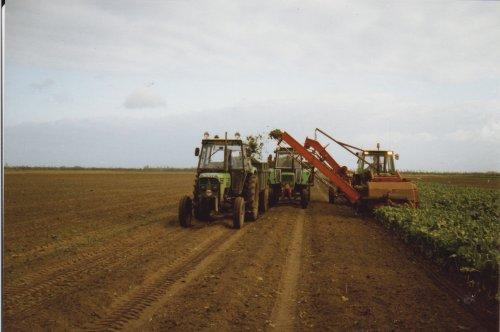 Foto van een Deutz Meerdere aan het bietenrooien. Tussen rooier een D7206A en voor achterste kipper D6806 en de voorste een D7206