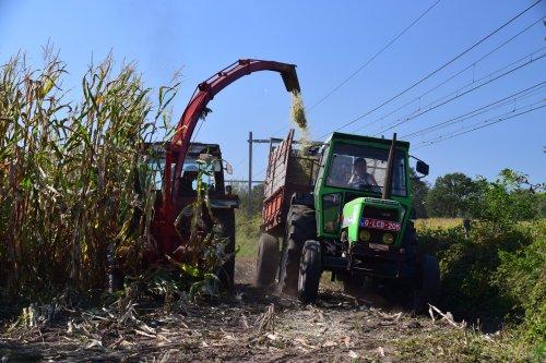 Mais hakselen met een Fiat 70-90 en Deutz D7807. Geplaatst door jd7920 op 26-09-2018 om 11:33:46, op TractorFan.nl - de nummer 1 tractor foto website.