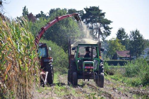 Mais hakselen met een Fiat 70-90 en Deutz D7807. Geplaatst door jd7920 op 26-09-2018 om 11:33:49, op TractorFan.nl - de nummer 1 tractor foto website.