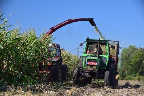 Mais hakselen met een Fiat 70-90 en Deutz D7807. Geplaatst door jd7920 op 26-09-2018 om 11:33:50, op TractorFan.nl - de nummer 1 tractor foto website.