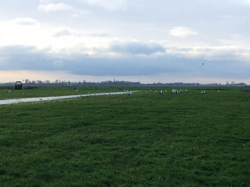 Foto van een Deutz D8006 sinds een week de pomp weer aan. Nu bijna 6 ha in 5 uurtjes blank. Afgelopen zomer met de droogte 2,5 in 13 uur.   Zoals je ziet heeft het effect want de ooievaars vissen nog steeds met man en macht muizen uit de grond....