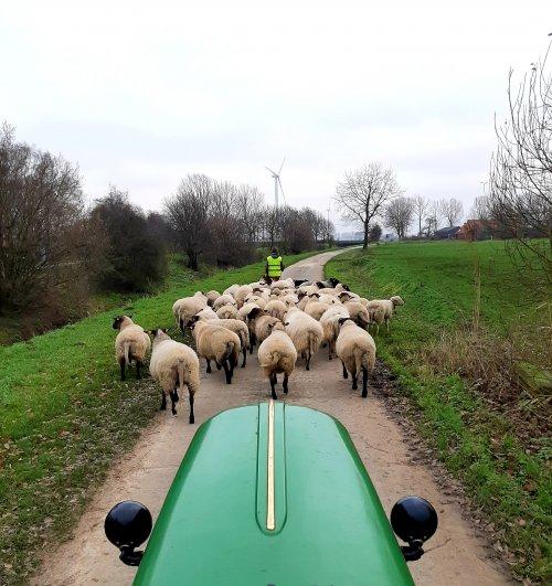 Mooi,zo'n kudde schapen.. Geplaatst door stijn-de-bock op 02-01-2020 om 17:12:20, met 11 reacties.