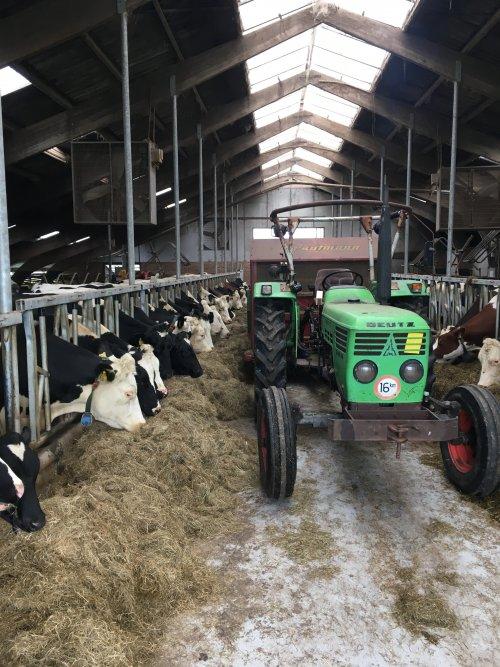 Sinds 1,5 jaar wordt er weer gevoerd met een blokkenwagen. Kwa tijd maakt het weinig uit, maar het gewicht van de kuhn balen werd dusdanig zwaar voor de vooras van de trekkers dat dit een goede optie was.