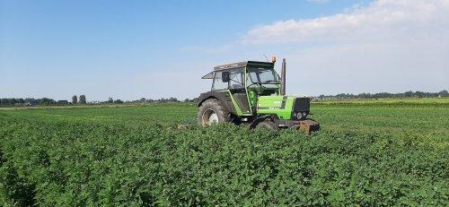 Foto van een Deutz DX 430. Geplaatst door thijs-grijsen op 26-12-2020 om 22:32:45, op TractorFan.nl - de nummer 1 tractor foto website.