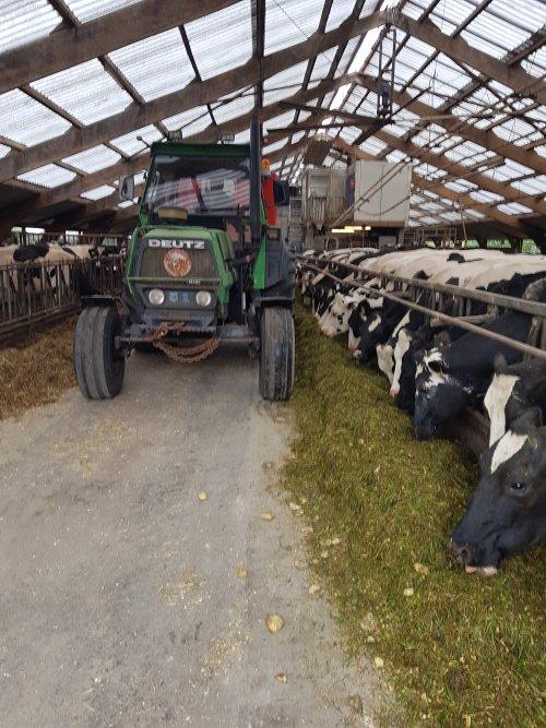 Foto van een Deutz DX 85, de koeien tweede paasdag een verrassing gegeven. Eerste keer groen gras gemaaid van het jaar, dit mengen we door het gewone rantsoen zoals te zien is. Was mooi om te zien dat toen alle koeien de taarup opraapwagen hadden zien rijden ze allemaal naar het voerhek kwamen omdat ze wisten wat er ging komen😋