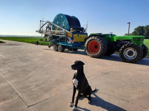Foto van een Deutz D13006 onderweg om de plantjes water te geven. Geplaatst door BvdD op 07-06-2021 om 19:34:30, met 2 reacties.