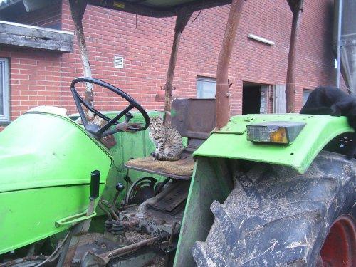 Foto van een Deutz D5506, mijn nieuwe besturde :). Geplaatst door Diesel-in-Fendt op 30-08-2010 om 17:40:29, met 6 reacties.