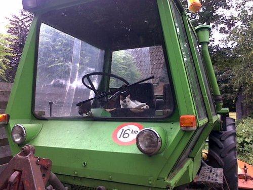 Foto van een Deutz haarbal, bezig met poseren. de kat heeft zich het goed bekeken.. Geplaatst door jappetje op 02-07-2011 om 12:52:04, op TractorFan.nl - de nummer 1 tractor foto website.