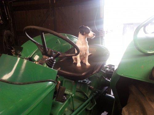 Foto van een Deutz haarbal, druk bezig met Poseren. Ons nieuw hondje op de 4005 :). Geplaatst door deutzfanJos op 15-06-2013 om 06:45:08, met 2 reacties.