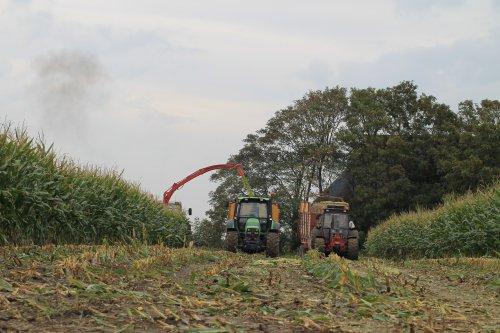 Foto van een Deutz-Fahr Agrotron in het mais. Geplaatst door DeutzD40L op 28-09-2020 om 19:02:56, op TractorFan.nl - de nummer 1 tractor foto website.