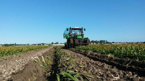 Loonbedrijf van Steijn uit de Zilk bezig met hyacinten op zwad aan het rooien in Noordwijkerhout. Geplaatst door RobDeutz104 op 06-06-2015 om 21:55:28, met 14 reacties.