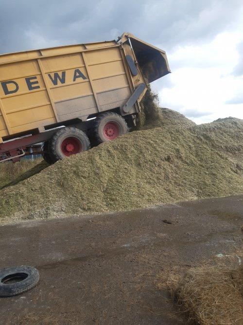 Foto van een Dewa Silagewagen laatste mais van 2020 bij ons thuis. Kuiltje apart gemaakt voor het jongvee want deze maïs had weinig graan.