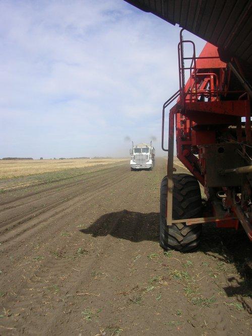 Foto van een Dewulf superia, bezig met aardappels rooien. Canada 2011.   Pluimen! :D. Geplaatst door JohnDElema op 11-01-2012 om 17:40:54, met 4 reacties.