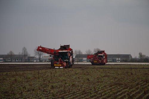 Loonbedrijf Weltjens Bocholt aan het schorseneren rooien met hun Dewulf RA3060 en Dewulf Mega R3000 rooier.  Meer foto's zijn te bekijken op: http://www.trekkerfotografie.nl