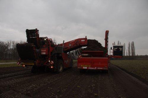 Loonbedrijf Weltjens Bocholt aan het schorseneren rooien met hun Dewulf Mega R3000 rooier en Dewulf overlader.   Meer foto's zijn te bekijken op: http://www.trekkerfotografie.nl