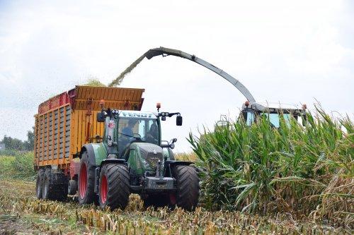 Melkveehouder Janssens. Geplaatst door jd7920 op 19-08-2018 om 22:52:00, op TractorFan.nl - de nummer 1 tractor foto website.
