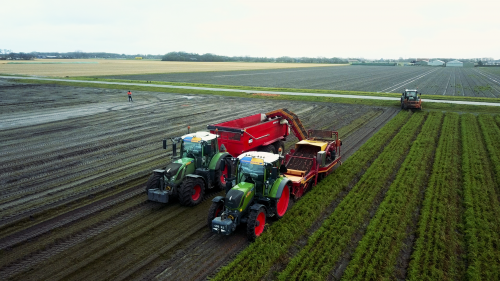 Loonbedrijf Hoogland aan het wortels rooien. De wortels staan met 5 rijen op een bed van 1.80m. De wortels worden dezelfde dag nog met de vrachtwagen afgevoerd.