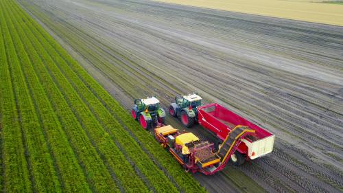 Loonbedrijf Hoogland (Burgervlotbrug) × op de foto aan het wortelen rooien in December. De wortels die nu nog in het land zitten zijn voorzien van een strodek op vorstschade te voorkomen.