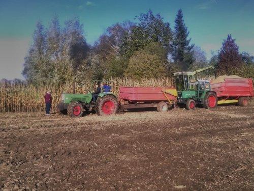 Fendt 309 LS en Farmer 5SA in de mais. Geplaatst door Gerald Panhuis op 29-03-2020 om 21:22:40, op TractorFan.nl - de nummer 1 tractor foto website.