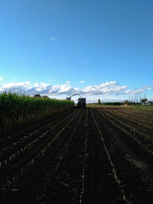 Foto van een Fendt 820 met kaweco loswagen samen met de Claas 690 onder een mooi zonnetje de mais afdoen 😜