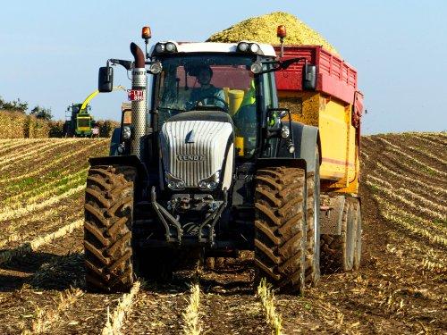 Foto van een Fendt 936, bezig met mais hakselen.. Geplaatst door NHfan97 op 14-10-2015 om 23:21:45, op TractorFan.nl - de nummer 1 tractor foto website.