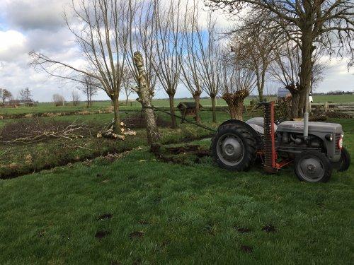 Foto van een Ferguson TEF, na de harde wind twee weken geleden wat kachelhout moeten maken.. Geplaatst door Arie_MF op 26-03-2019 om 18:01:28, met 14 reacties.