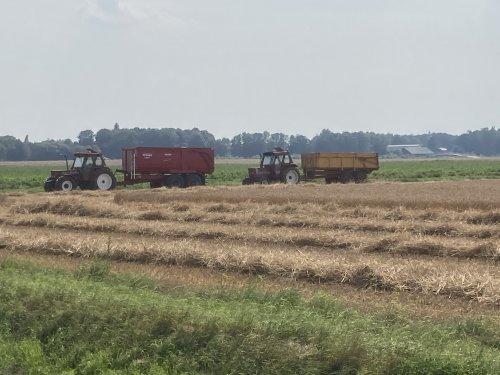 Foto van een Fiat Meerdere te wachten tot de kippers vol zijn.. Geplaatst door Fast Eddy op 12-08-2020 om 10:07:50, op TractorFan.nl - de nummer 1 tractor foto website.