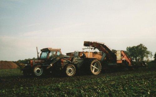 Foto van een Fiat 70-66 DT voor de bieten lader met een 70-90 DT voor de kieper . Foto komt uit fam. album en is gemaakt in de jaren 90.