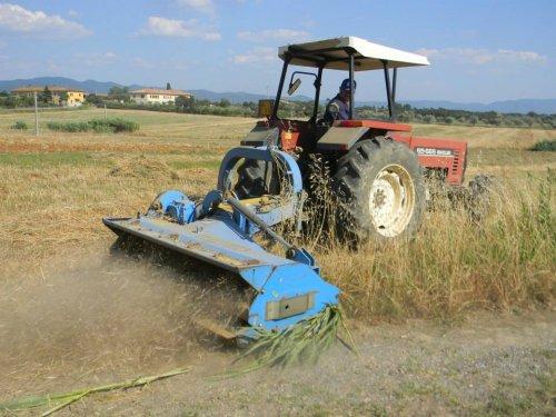 Foto van een Fiat 65-66, bezig met gras maaien in cecina foto gemaakt door Cor.. Geplaatst door warmerbros op 06-07-2013 om 11:08:29, op TractorFan.nl - de nummer 1 tractor foto website.