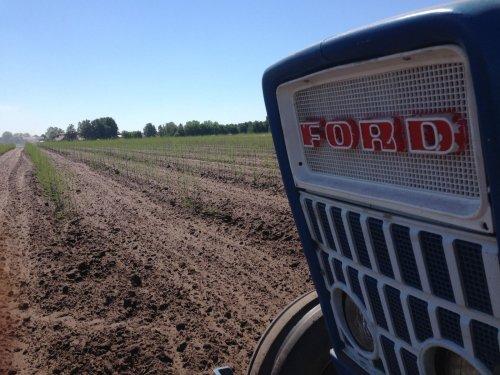 Foto van een Ford 3000 bezig met haspel uittrekken tussen jonge aanplant asperges. Geplaatst door blue-ford4600 op 09-06-2017 om 12:43:32, op TractorFan.nl - de nummer 1 tractor foto website.