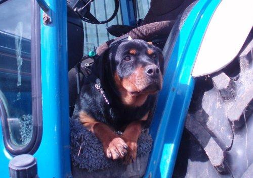 hondje bezig met bewaken van onze rijkdom!. Geplaatst door bomhofpwer op 15-04-2012 om 21:04:42, met 11 reacties.