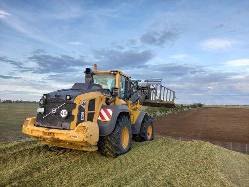 Foto van een Volvo L110H (wiellader) bezig met het vastrijden van mais voor Verschoor fourage.. Geplaatst door trekkerfan16a op 28-10-2020 om 16:14:17, op TractorFan.nl - de nummer 1 tractor foto website.
